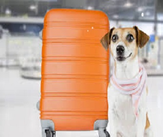 Como transportar animais de estimação em voos